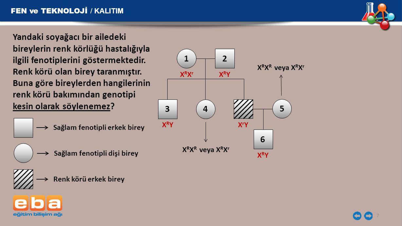 FEN ve TEKNOLOJİ / KALITIM 7 12 3 XRYXRY XRXrXRXr XRYXRY X R X R veya X R X r XrYXrY Yandaki soyağacı bir ailedeki bireylerin renk körlüğü hastalığıyl