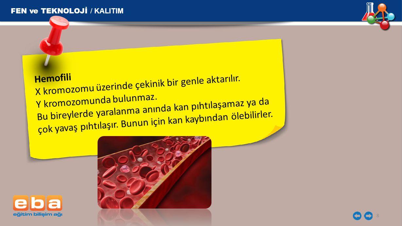 FEN ve TEKNOLOJİ / KALITIM 8 Hemofili X kromozomu üzerinde çekinik bir genle aktarılır. Y kromozomunda bulunmaz. Bu bireylerde yaralanma anında kan pı