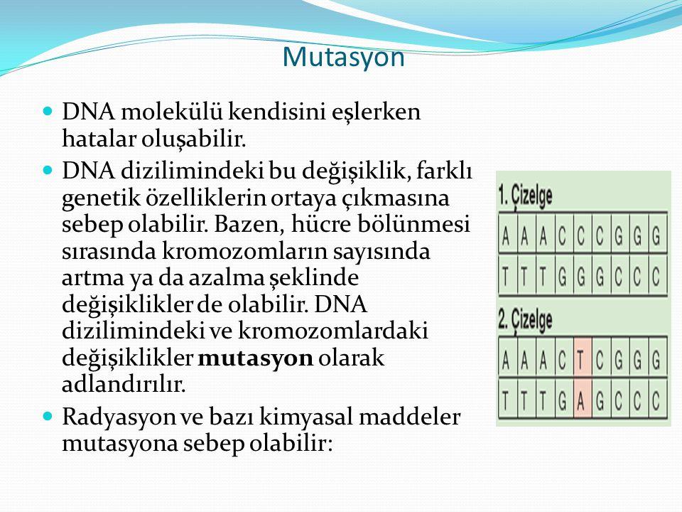 Mutasyon DNA molekülü kendisini eşlerken hatalar oluşabilir. DNA dizilimindeki bu değişiklik, farklı genetik özelliklerin ortaya çıkmasına sebep olabi