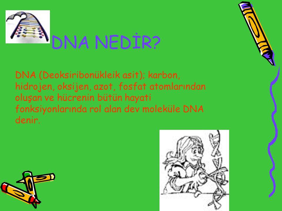 DNA NEDİR? DNA (Deoksiribonükleik asit); karbon, hidrojen, oksijen, azot, fosfat atomlarından oluşan ve hücrenin bütün hayati fonksiyonlarında rol ala