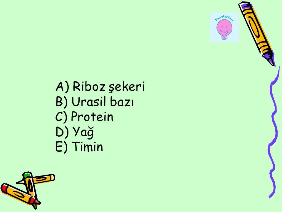 A) Riboz şekeri B) Urasil bazı C) Protein D) Yağ E) Timin