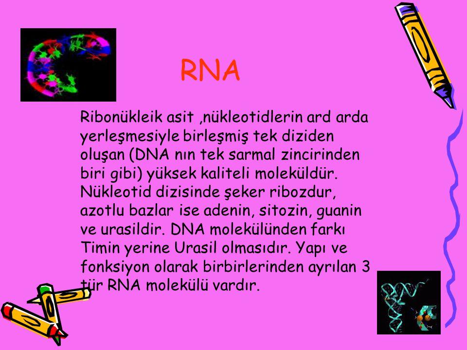 RNA Ribonükleik asit,nükleotidlerin ard arda yerleşmesiyle birleşmiş tek diziden oluşan (DNA nın tek sarmal zincirinden biri gibi) yüksek kaliteli mol
