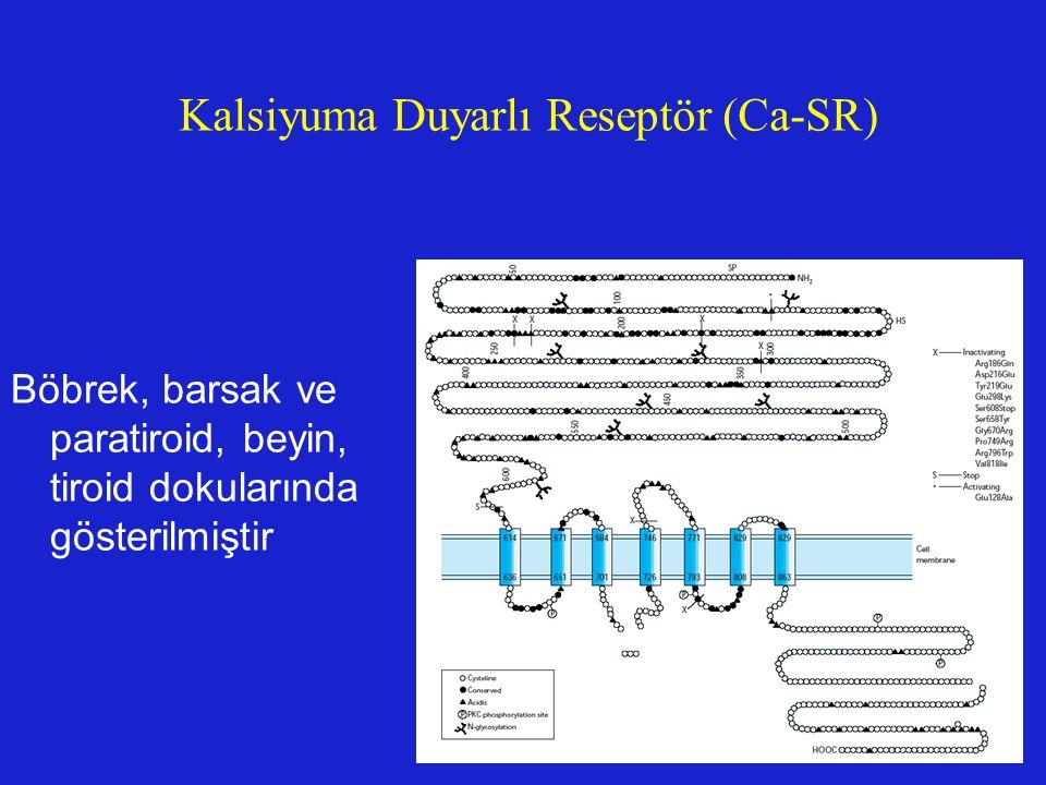 Kalsiyuma Duyarlı Reseptör (Ca-SR) Böbrek, barsak ve paratiroid, beyin, tiroid dokularında gösterilmiştir