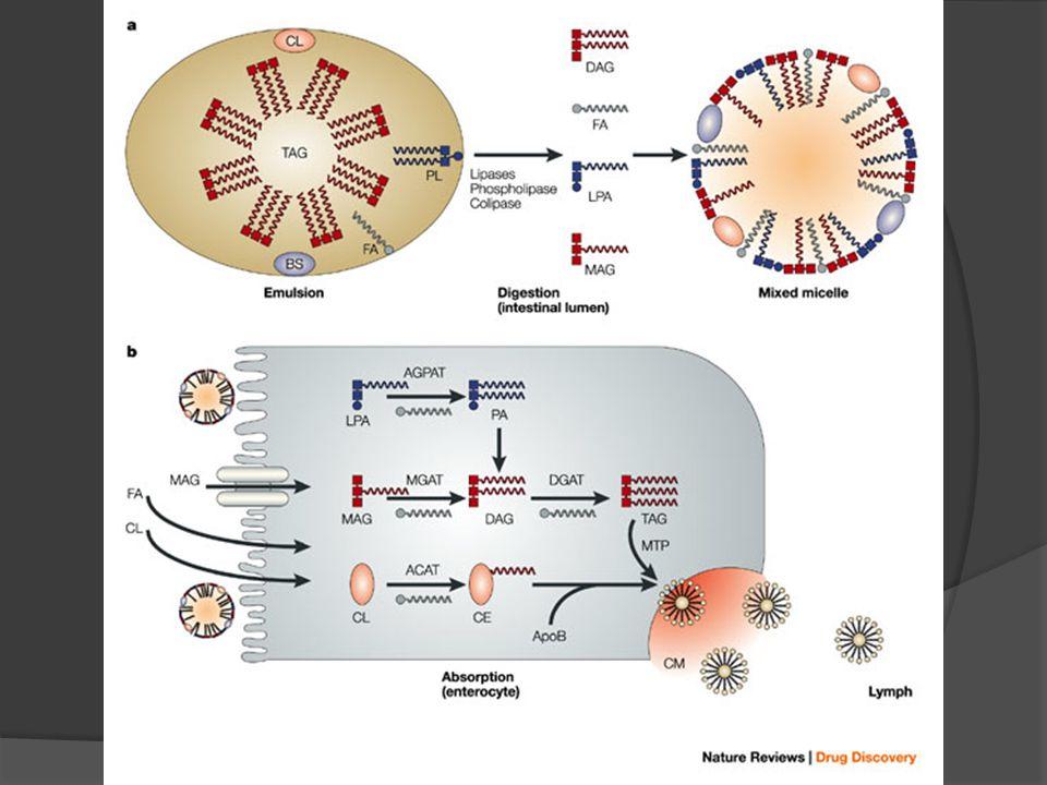 Safranın rolü: emilsüfikasyon 11