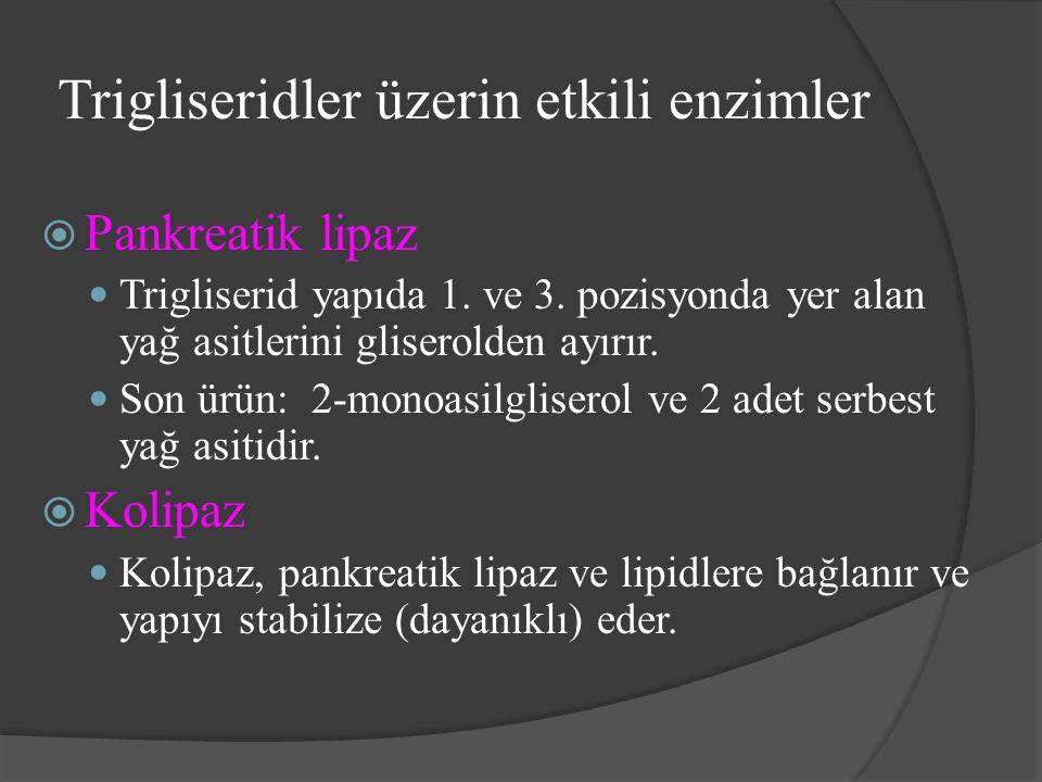 Trigliseridler üzerin etkili enzimler  Pankreatik lipaz Trigliserid yapıda 1. ve 3. pozisyonda yer alan yağ asitlerini gliserolden ayırır. Son ürün: