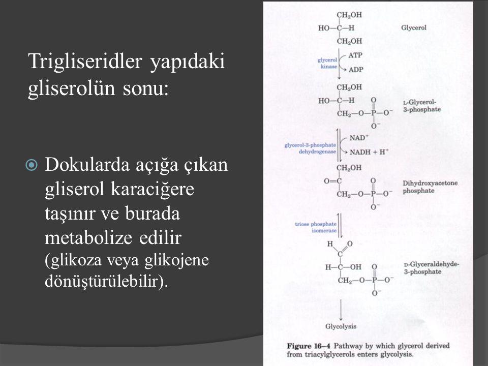 Trigliseridler yapıdaki gliserolün sonu:  Dokularda açığa çıkan gliserol karaciğere taşınır ve burada metabolize edilir (glikoza veya glikojene dönüş
