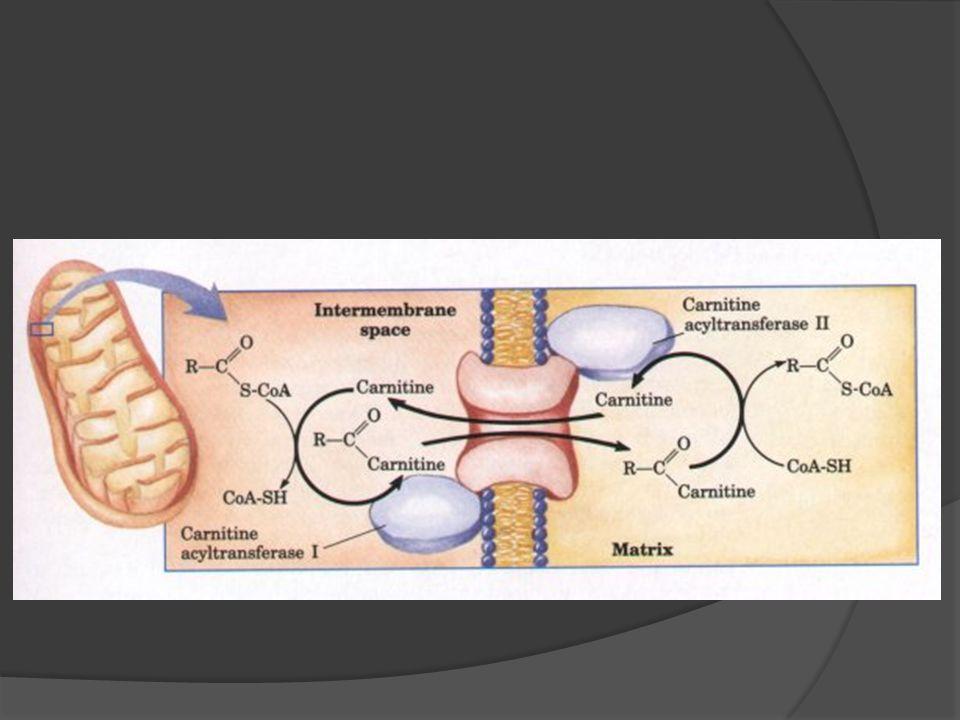 Yağ asitlerinin beta oksidasyonu  β -oksidasyon yağ asitlerinin mitokondride 2 karbonlu ünitelere parçalanarak katabolize edildiği, enerji ihtiyacının karşılanmasında çok önemli bir ana metabolik yoldur.