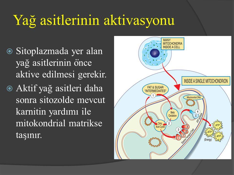 Yağ asitlerinin aktivasyonu  Sitoplazmada yer alan yağ asitlerinin o ̈ nce aktive edilmesi gerekir.  Aktif yağ asitleri daha sonra sitozolde mevcut