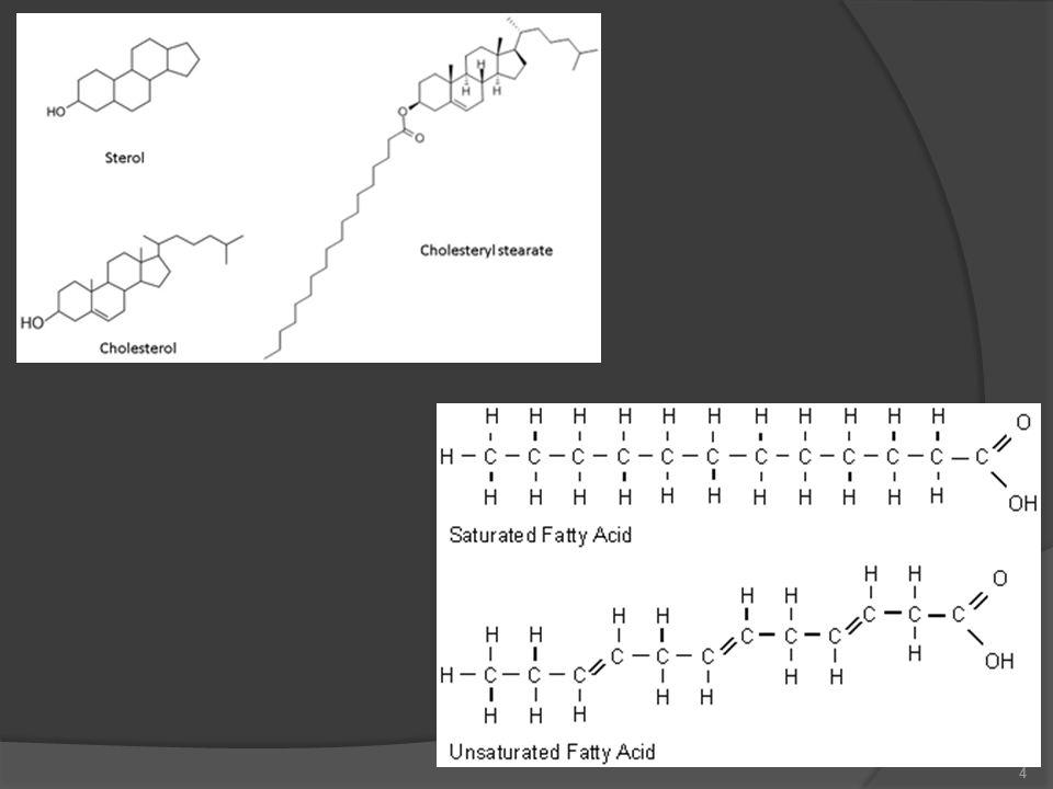 Midede lipid hidrolizi  Lipidlerin sindirimi midede başlar.