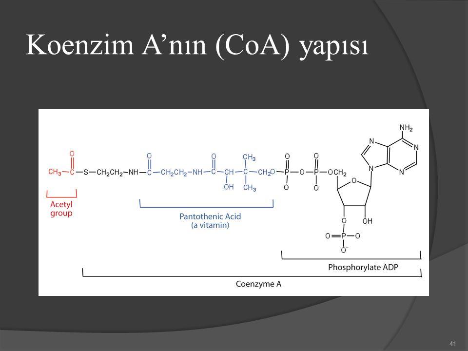 Koenzim A'nın (CoA) yapısı 41