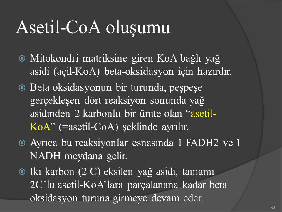 Asetil-CoA oluşumu  Mitokondri matriksine giren KoA bağlı yağ asidi (açil-KoA) beta-oksidasyon için hazırdır.  Beta oksidasyonun bir turunda, peşpeş