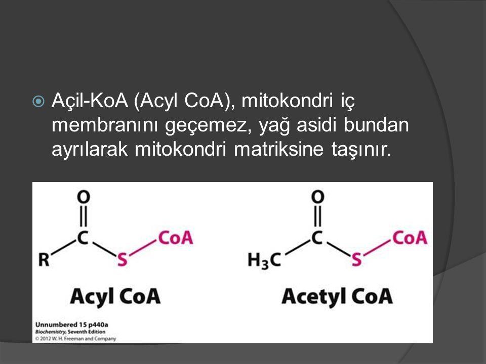  Açil-KoA (Acyl CoA), mitokondri iç membranını geçemez, yağ asidi bundan ayrılarak mitokondri matriksine taşınır.