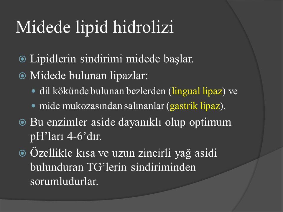 Midede lipid hidrolizi  Lipidlerin sindirimi midede başlar.  Midede bulunan lipazlar: dil kökünde bulunan bezlerden (lingual lipaz) ve mide mukozası