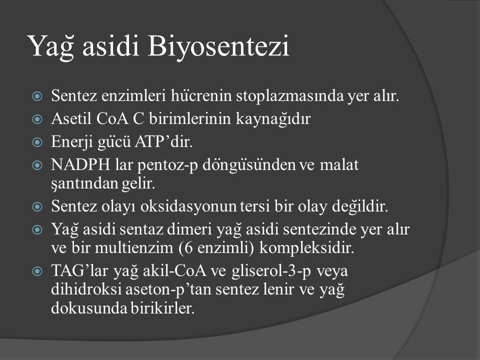 Yag ̆ asidi Biyosentezi  Sentez enzimleri hu ̈ crenin stoplazmasında yer alır.  Asetil CoA C birimlerinin kaynag ̆ ıdır  Enerji gu ̈ cü ATP'dir. 