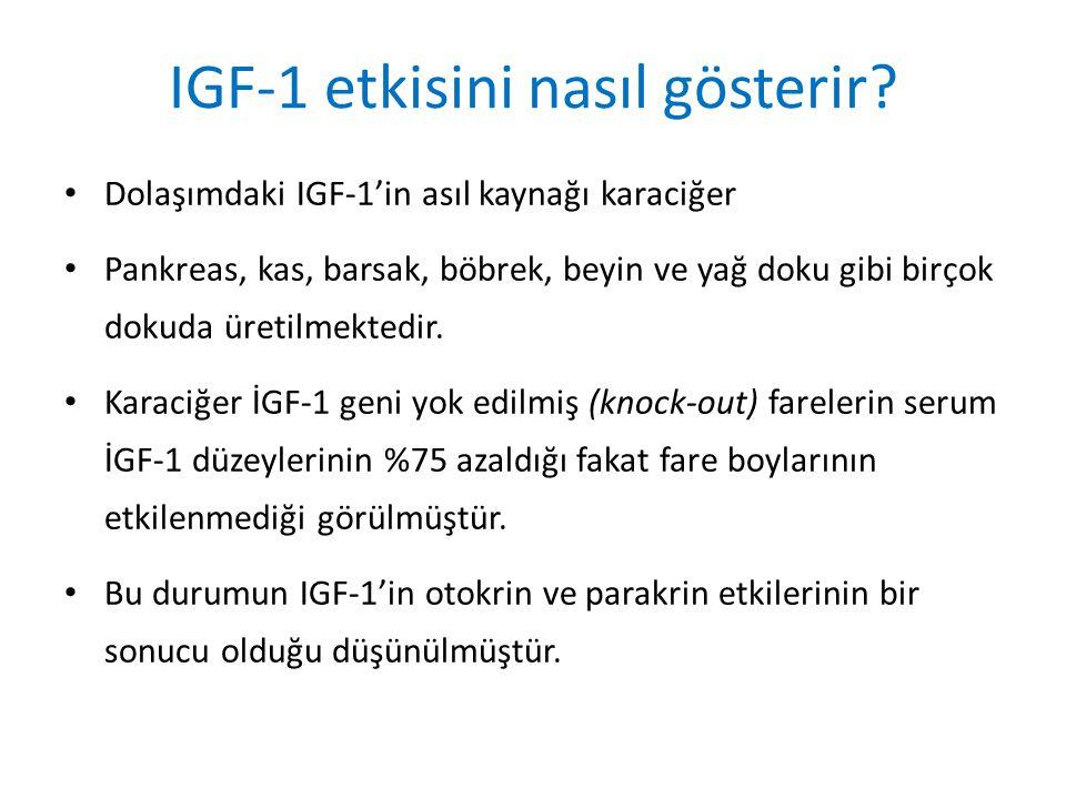 IGF-1 etkisini nasıl gösterir? Dolaşımdaki IGF-1'in asıl kaynağı karaciğer Pankreas, kas, barsak, böbrek, beyin ve yağ doku gibi birçok dokuda üretilm