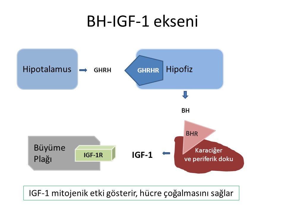 BH-IGF-1 ekseni HipotalamusHipofiz Karaciğer ve periferik doku BHR GHRHR Büyüme Plağı IGF-1R GHRH BH IGF-1 IGF-1 mitojenik etki gösterir, hücre çoğalm