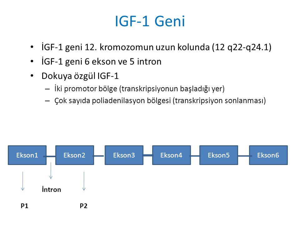 IGF-1 Geni İGF-1 geni 12. kromozomun uzun kolunda (12 q22-q24.1) İGF-1 geni 6 ekson ve 5 intron Dokuya özgül IGF-1 – İki promotor bölge (transkripsiyo