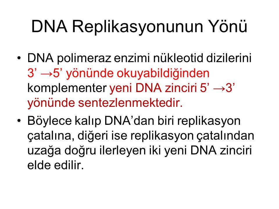 DNA Replikasyonunun Yönü DNA polimeraz enzimi nükleotid dizilerini 3' →5' yönünde okuyabildiğinden komplementer yeni DNA zinciri 5' →3' yönünde sentezlenmektedir.