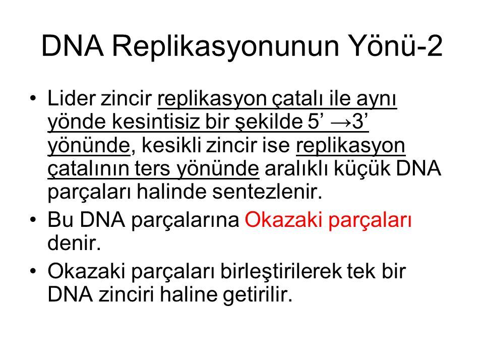 DNA Replikasyonunun Yönü-2 Lider zincir replikasyon çatalı ile aynı yönde kesintisiz bir şekilde 5' →3' yönünde, kesikli zincir ise replikasyon çatalının ters yönünde aralıklı küçük DNA parçaları halinde sentezlenir.