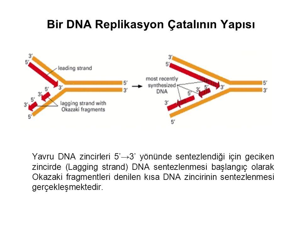 Bir DNA Replikasyon Çatalının Yapısı Yavru DNA zincirleri 5'→3' yönünde sentezlendiği için geciken zincirde (Lagging strand) DNA sentezlenmesi başlangıç olarak Okazaki fragmentleri denilen kısa DNA zincirinin sentezlenmesi gerçekleşmektedir.