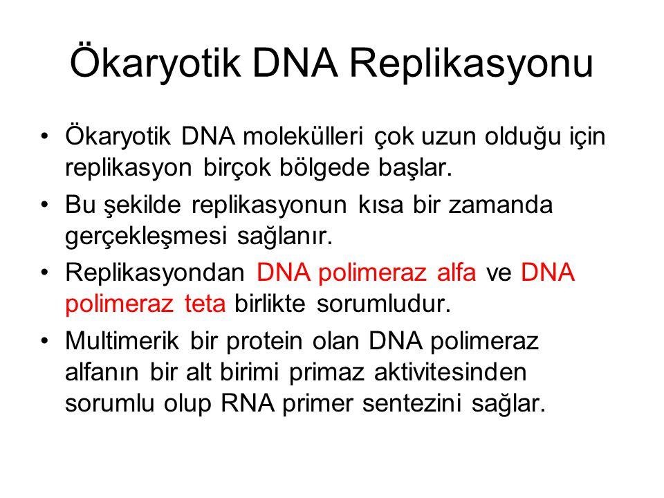 Ökaryotik DNA Replikasyonu Ökaryotik DNA molekülleri çok uzun olduğu için replikasyon birçok bölgede başlar.