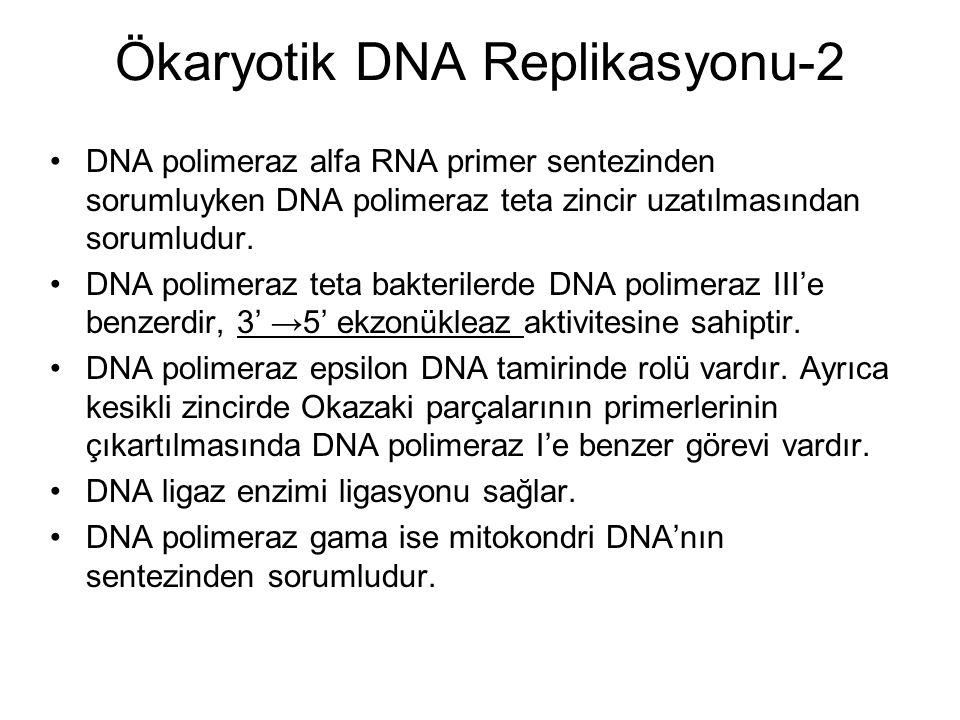 Ökaryotik DNA Replikasyonu-2 DNA polimeraz alfa RNA primer sentezinden sorumluyken DNA polimeraz teta zincir uzatılmasından sorumludur.