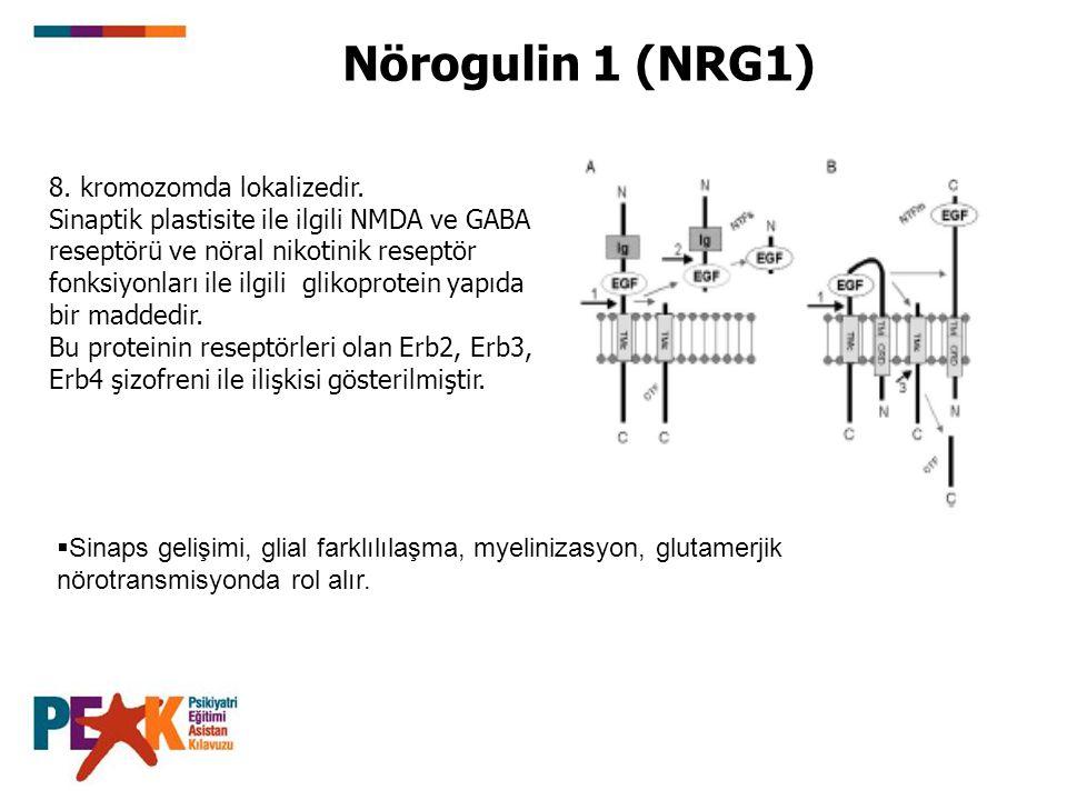 Nörogulin 1 (NRG1) 8. kromozomda lokalizedir. Sinaptik plastisite ile ilgili NMDA ve GABA reseptörü ve nöral nikotinik reseptör fonksiyonları ile ilgi