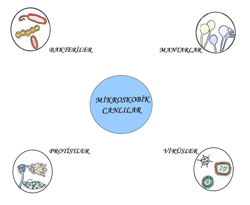 BAKTERİ HÜCRESİ VİRÜSÜN HÜCREYE GİRİŞİ 1) Virüs hücreye gelir.