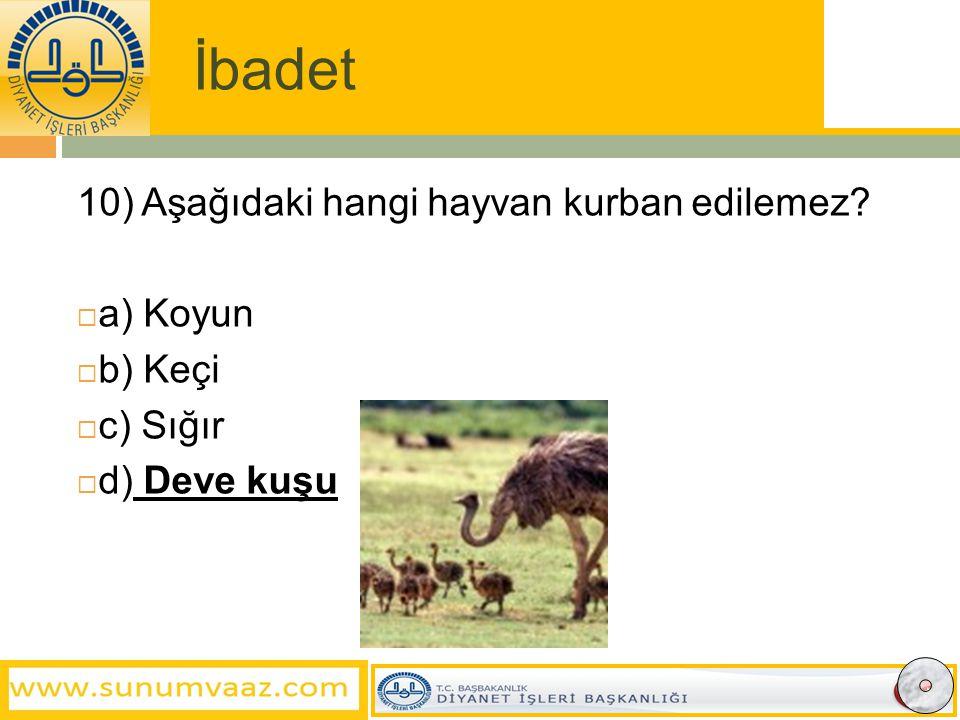 İbadet 10) Aşağıdaki hangi hayvan kurban edilemez?  a) Koyun  b) Keçi  c) Sığır  d) Deve kuşu