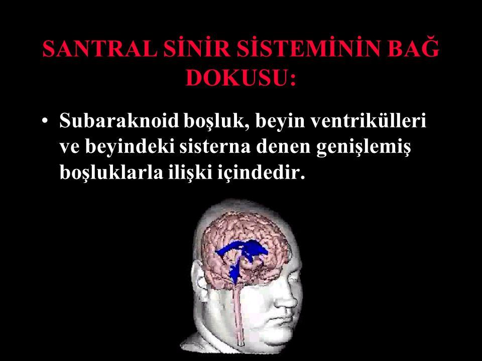 SANTRAL SİNİR SİSTEMİNİN BAĞ DOKUSU: Subaraknoid boşluk, beyin ventrikülleri ve beyindeki sisterna denen genişlemiş boşluklarla ilişki içindedir.