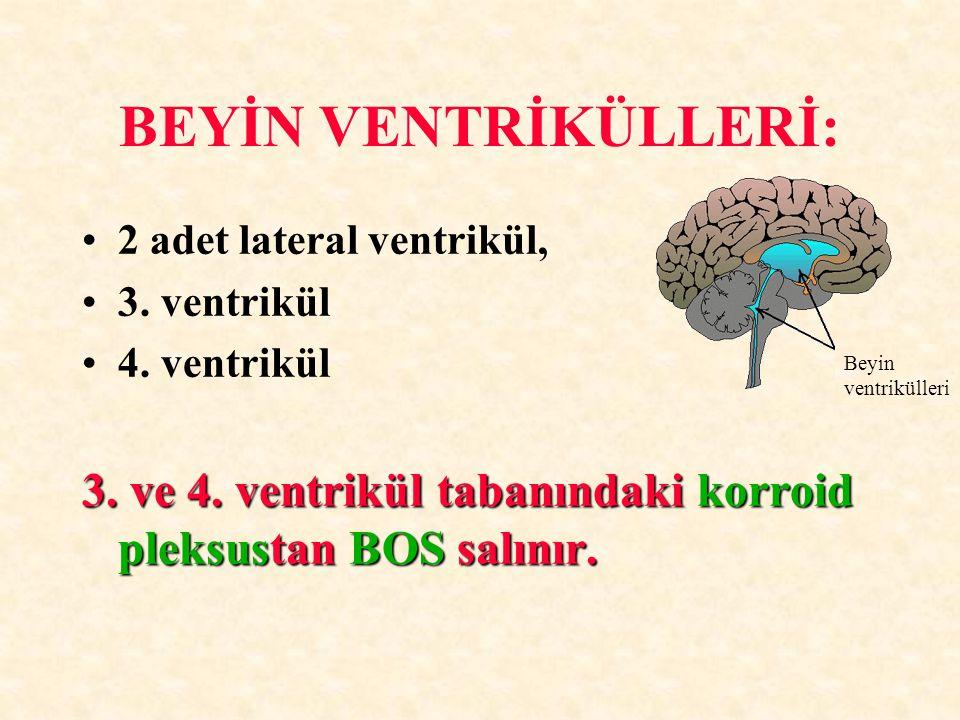 BEYİN VENTRİKÜLLERİ: 2 adet lateral ventrikül, 3. ventrikül 4. ventrikül 3. ve 4. ventrikül tabanındaki korroid pleksustan BOS salınır. Beyin ventrikü