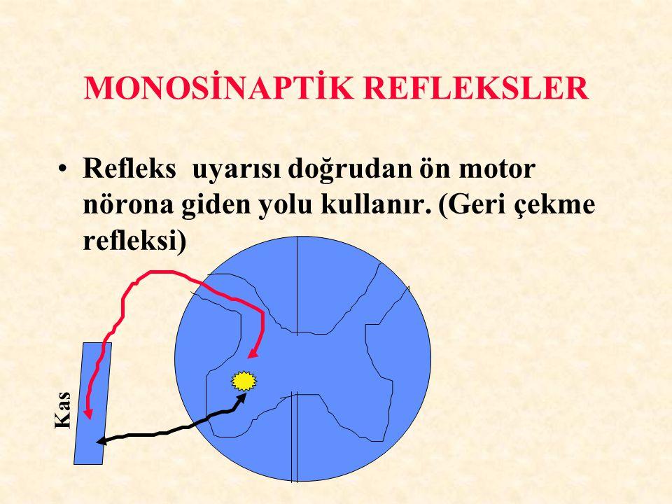MONOSİNAPTİK REFLEKSLER Refleks uyarısı doğrudan ön motor nörona giden yolu kullanır. (Geri çekme refleksi) Kas