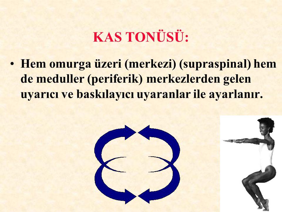 KAS TONÜSÜ: Hem omurga üzeri (merkezi) (supraspinal) hem de meduller (periferik) merkezlerden gelen uyarıcı ve baskılayıcı uyaranlar ile ayarlanır.