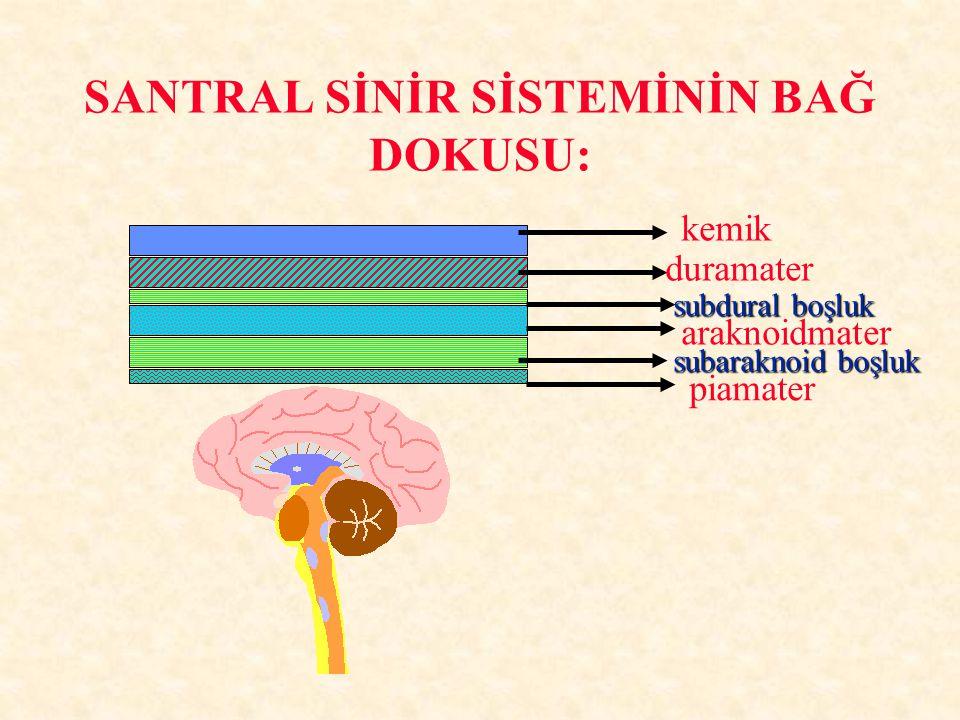 BEYİN OMURİLİK SIVISI: YAPIM:YAPIM: Korroid pleksusKorroid pleksus PiamaterPiamater Beyin damarlarıBeyin damarları EMİLİMEMİLİM Ventrikül duvarındaki venlerVentrikül duvarındaki venler