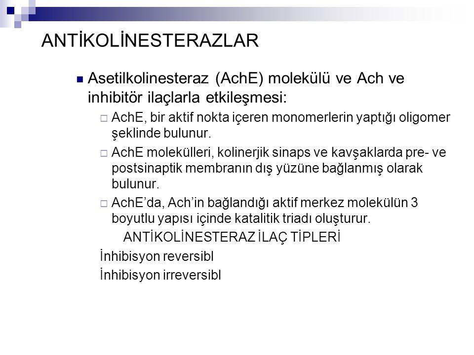 ANTİKOLİNESTERAZLAR Asetilkolinesteraz (AchE) molekülü ve Ach ve inhibitör ilaçlarla etkileşmesi:  AchE, bir aktif nokta içeren monomerlerin yaptığı