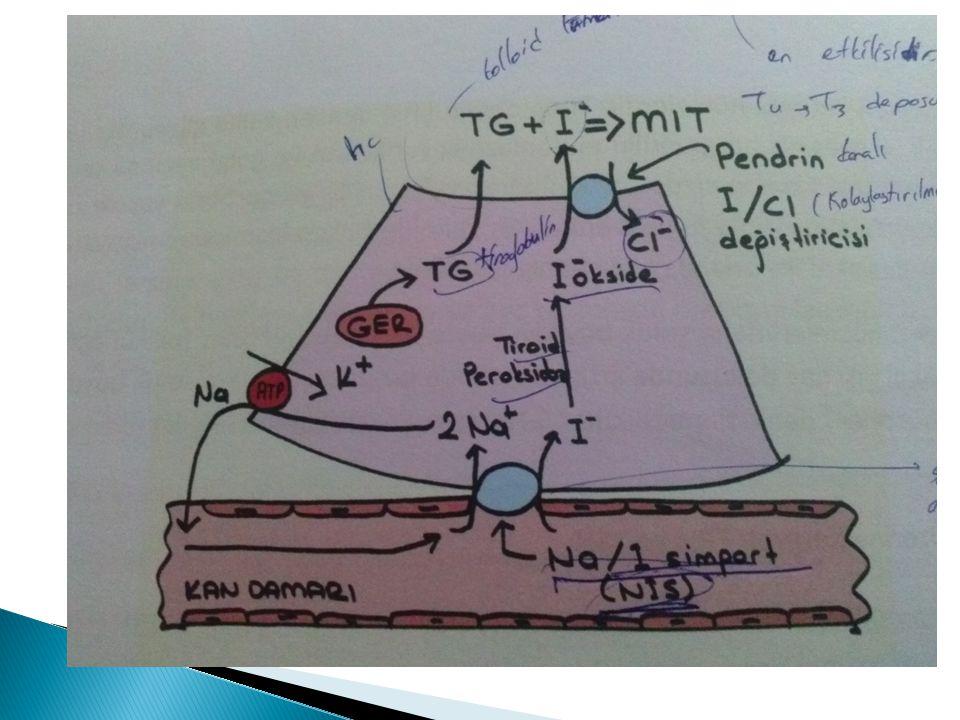 TSH: 0.5–4 mIU/L normal (gebelik hariç)  TSH: 4–10 mIU/L mIU/L T3, T4 normal:hafif subklinik hipotiroidi  TSH: >10 mIU/L T3, T4 normal: Ağır subklinik hipotiroidi  TSH: >10 mIU/L T4 ve/veya T3 düük: aikar hipotiroidi  TSH: >10 mIU/L, T3, T4 düük ve organ yetersizliği: miksödem koma