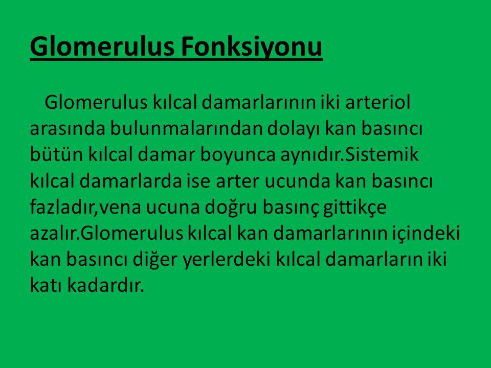 Glomerulus Fonksiyonu Glomerulus kılcal damarlarının iki arteriol arasında bulunmalarından dolayı kan basıncı bütün kılcal damar boyunca aynıdır.Siste