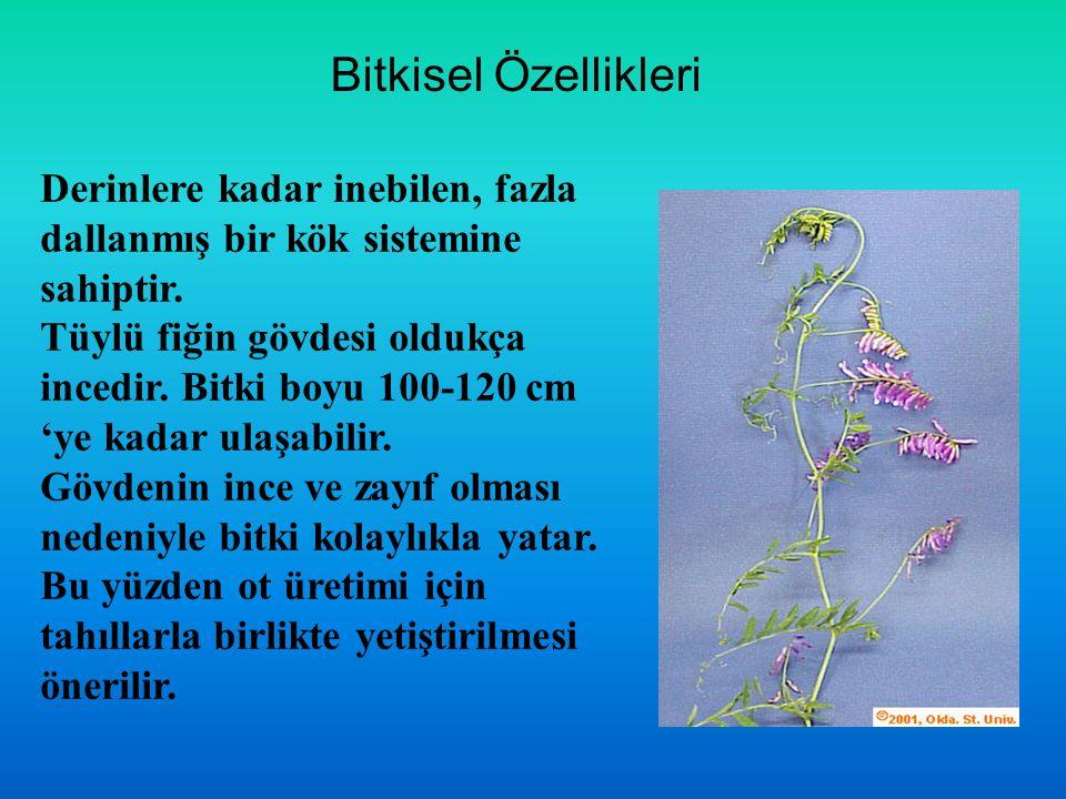 Bitkisel Özellikleri Derinlere kadar inebilen, fazla dallanmış bir kök sistemine sahiptir. Tüylü fiğin gövdesi oldukça incedir. Bitki boyu 100-120 cm