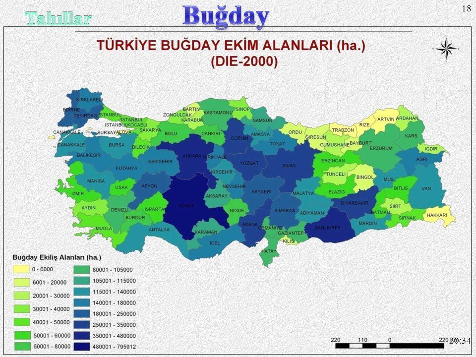 17 Çimlenme döneminde ilkbaharda ya ğ ı ş, olgunla ş ma döneminde yazın kuraklık ister. Dünyada ve Türkiye'de en geni ş tabii ekim alanına sahiptir.Tü