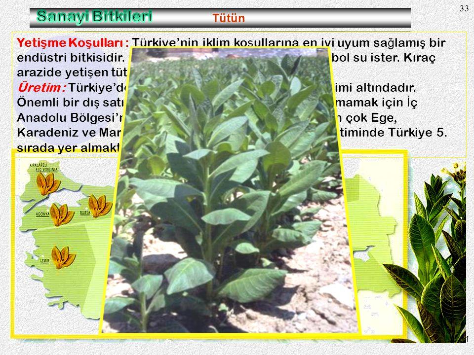 32 Mercimek 20:36 Kuraklı ğ a dayanıklı oldu ğ u için en fazla tarımı G. Do ğ u Anadolu Bölgesinde geli ş mi ş tir. Mercimek üretimimizin yarıdan fazl
