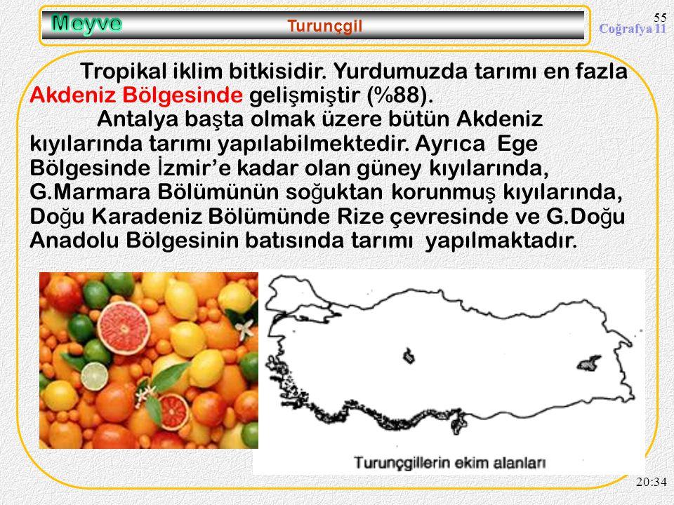 Akdeniz iklim bitkisidir. Kı ş ılıklı ğ ı ister ve yaz kuraklı ğ ı ister. En fazla tarımı Ege Bölgesi'nde geli ş mi ş tir (Ba ş ta Aydın gelir.) Üreti