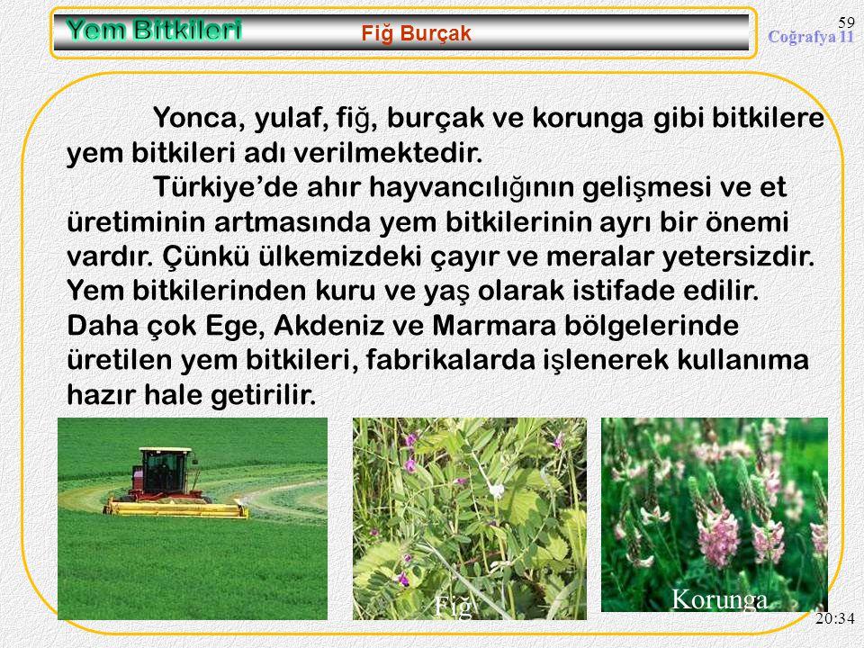 En fazla Ordu- Giresun olmak üzere Karadeniz kıyılarında tarımı yapılmaktadır. Ayrıca Marmara Bölgesinde Sakarya çevresinde tarımı yapılır. En fazla O