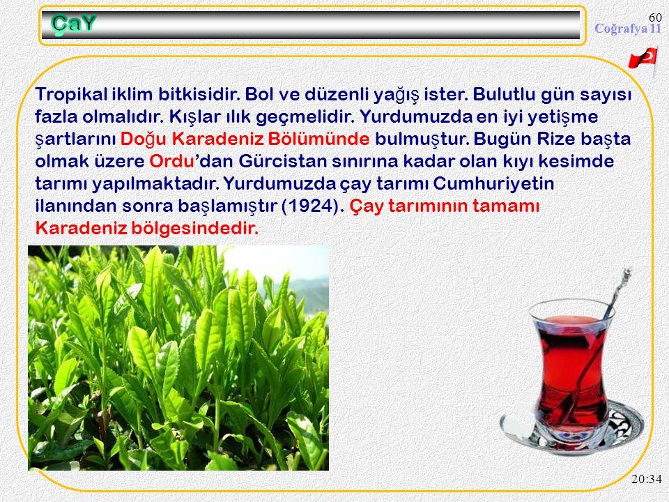 59 Fiğ Burçak 20:36 Yonca, yulaf, fi ğ, burçak ve korunga gibi bitkilere yem bitkileri adı verilmektedir. Türkiye'de ahır hayvancılı ğ ının geli ş mes