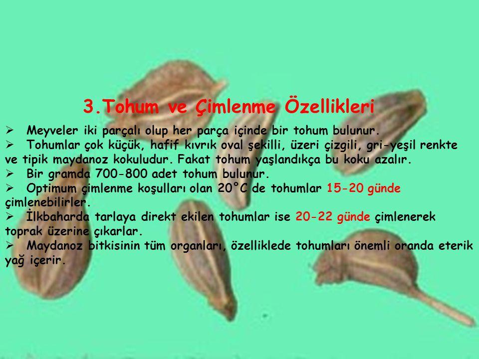 3.Tohum ve Çimlenme Özellikleri  Meyveler iki parçalı olup her parça içinde bir tohum bulunur.