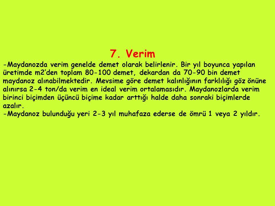 7.Verim -Maydanozda verim genelde demet olarak belirlenir.