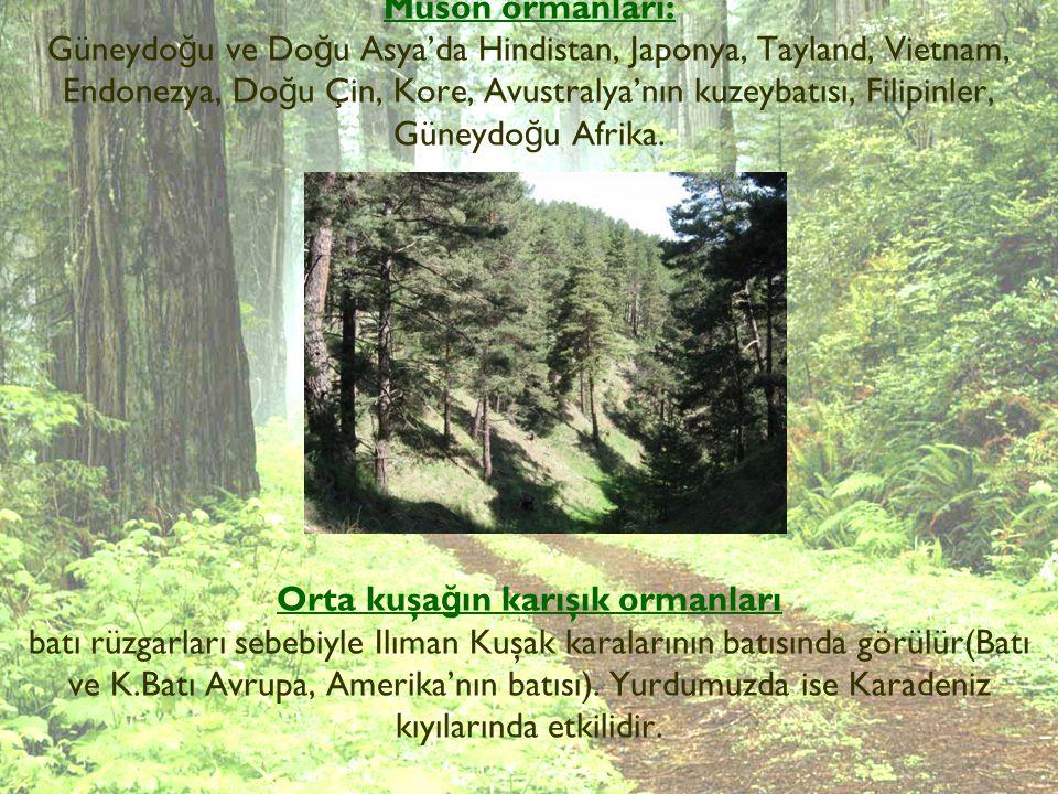 Muson ormanları: Güneydo ğ u ve Do ğ u Asya'da Hindistan, Japonya, Tayland, Vietnam, Endonezya, Do ğ u Çin, Kore, Avustralya'nın kuzeybatısı, Filipinl