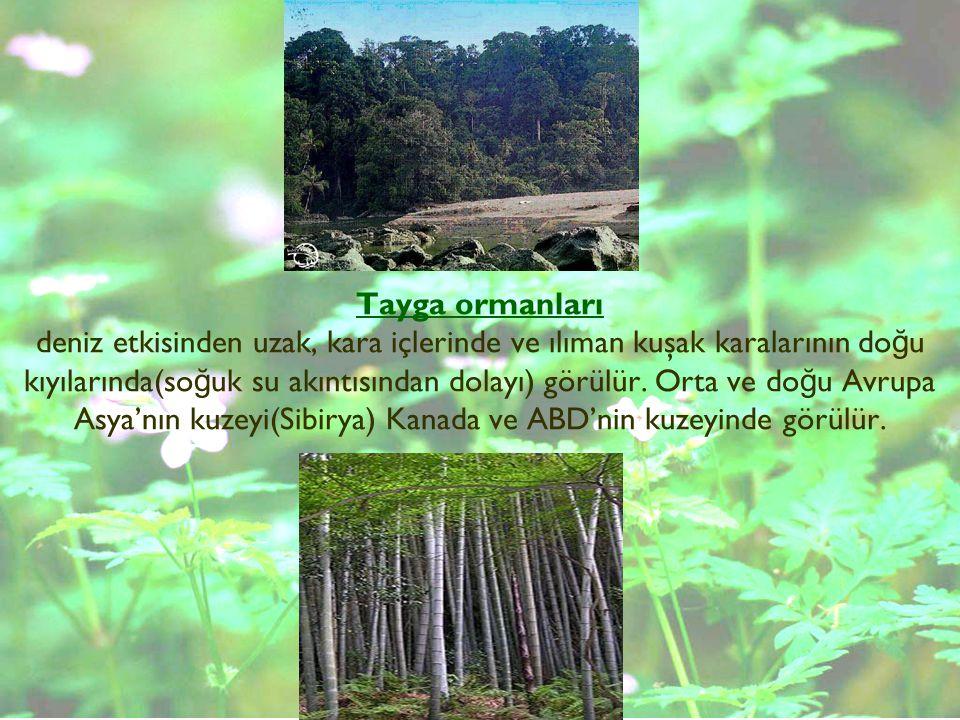Tayga ormanları deniz etkisinden uzak, kara içlerinde ve ılıman kuşak karalarının do ğ u kıyılarında(so ğ uk su akıntısından dolayı) görülür. Orta ve