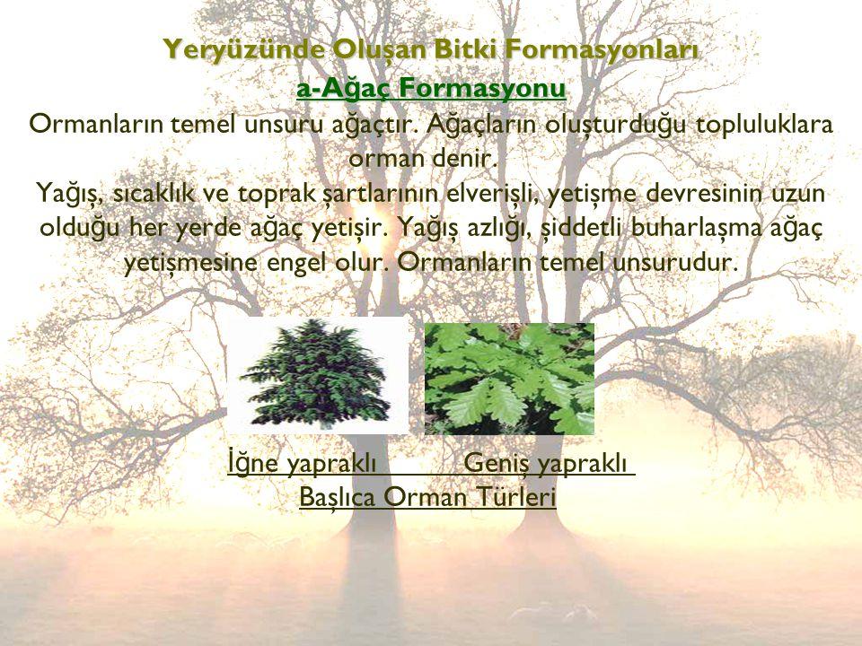 Yeryüzünde Oluşan Bitki Formasyonları a-A ğ aç Formasyonu Yeryüzünde Oluşan Bitki Formasyonları a-A ğ aç Formasyonu Ormanların temel unsuru a ğ açtır.