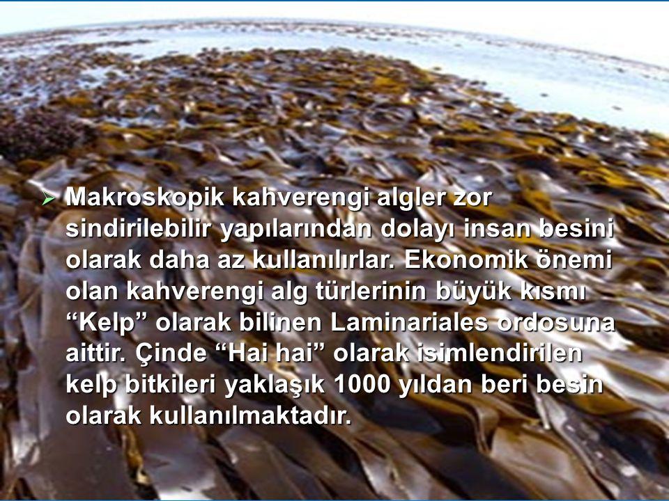  Makroskopik kahverengi algler zor sindirilebilir yapılarından dolayı insan besini olarak daha az kullanılırlar. Ekonomik önemi olan kahverengi alg t