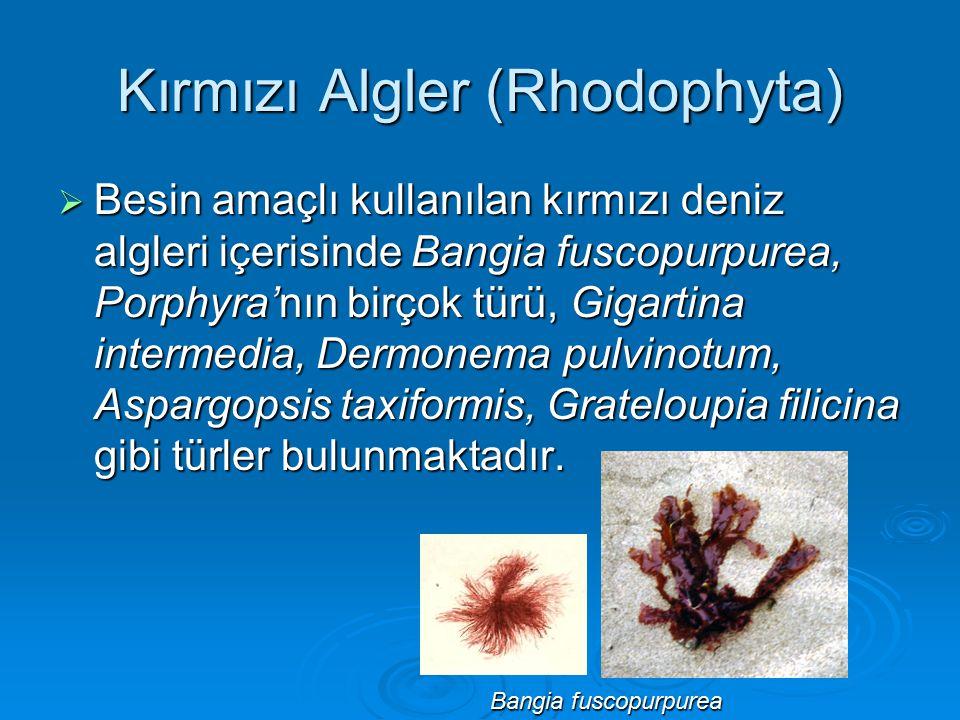 Kırmızı Algler (Rhodophyta)  Besin amaçlı kullanılan kırmızı deniz algleri içerisinde Bangia fuscopurpurea, Porphyra'nın birçok türü, Gigartina inter